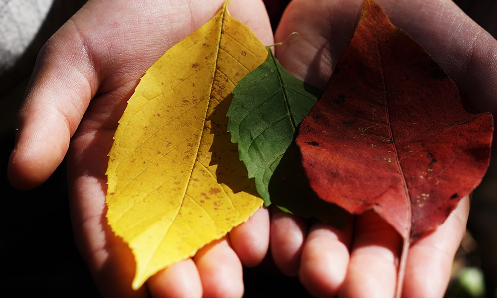 leaves-in-hands