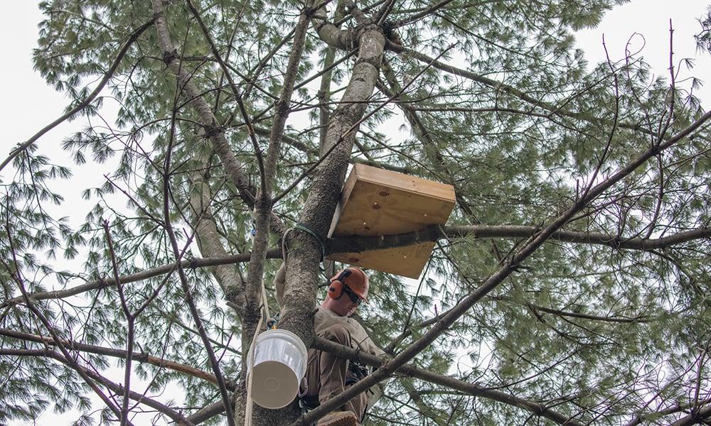 nelson-works-nest
