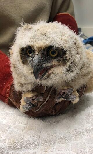 owlet-at-willowbrook.jpg