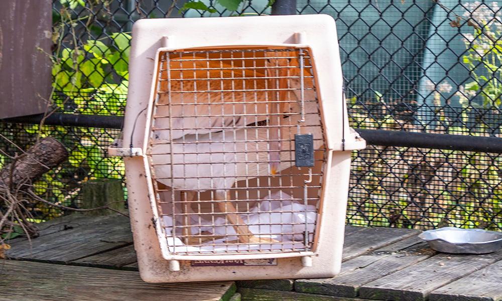 pelican-cage