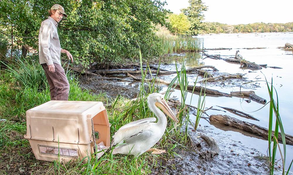pelican-release