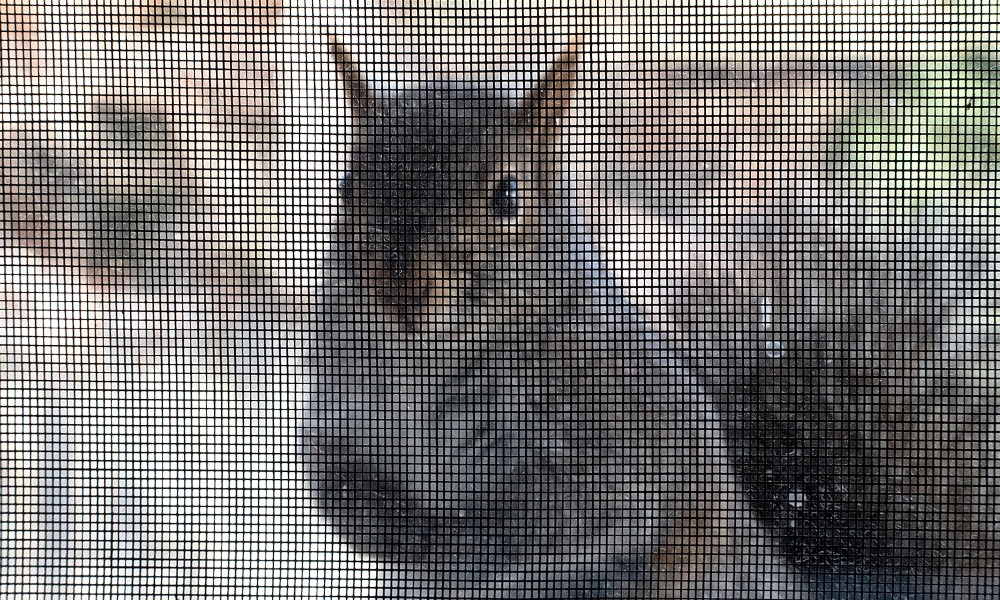 squirrel-at-screen-GeneWilburn-flickr.jpg