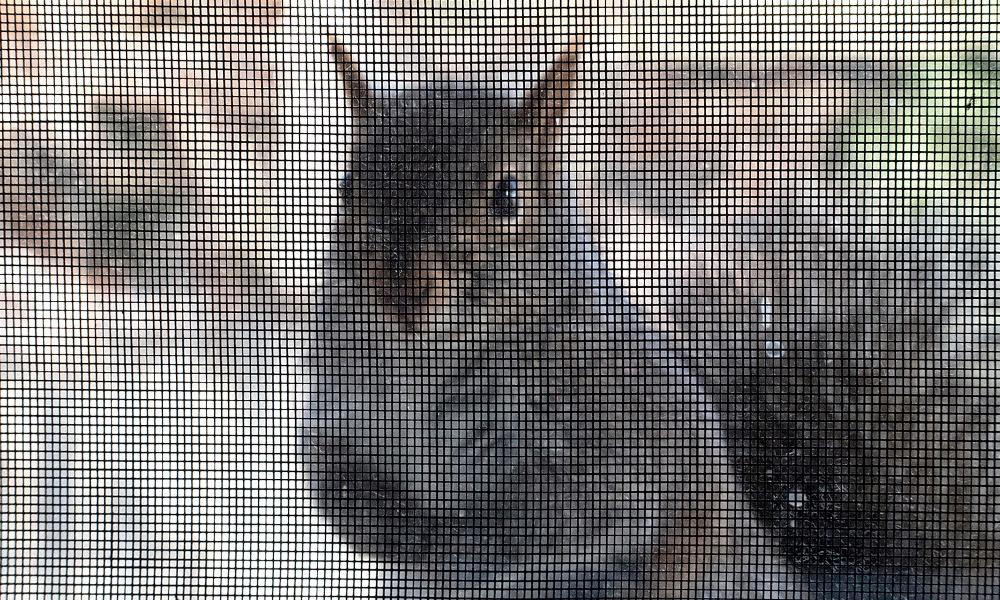 squirrel-at-screen-GeneWilburn-flickr.jpg
