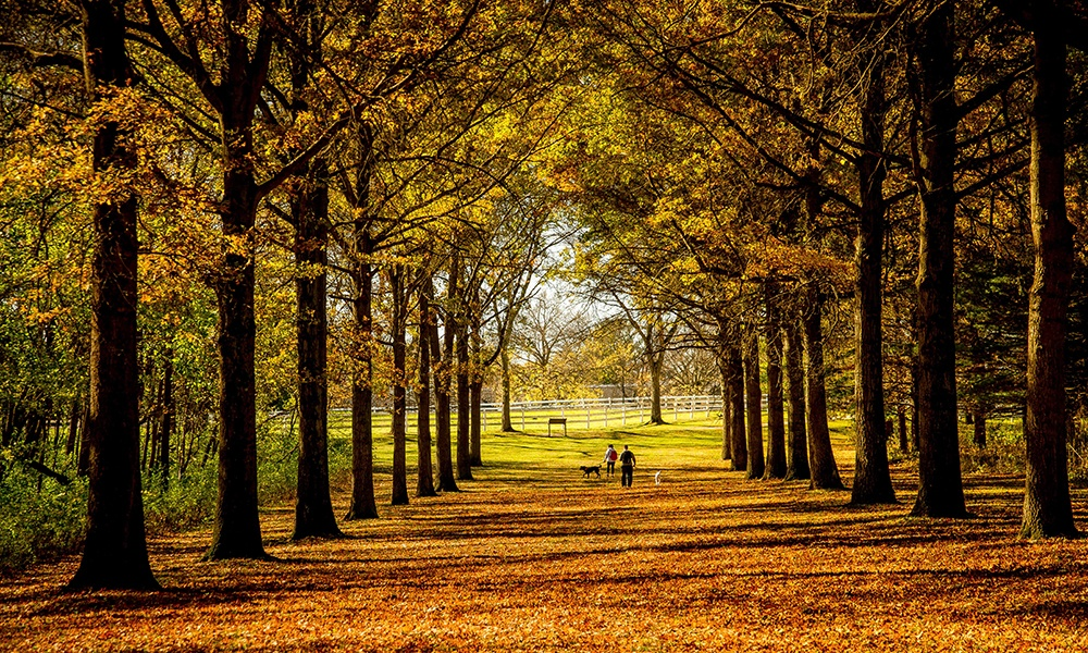 tree-lined-promenade