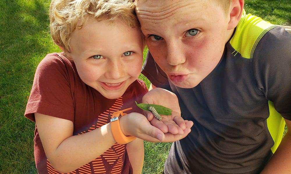 2018-caulk-boys-monarch-caterpillar