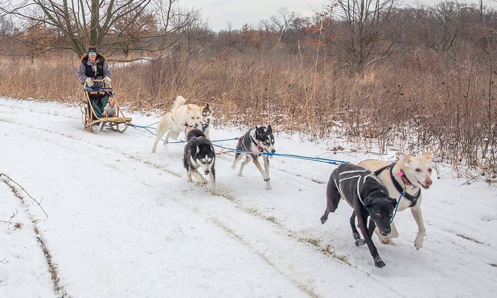 Annette-dogsledding