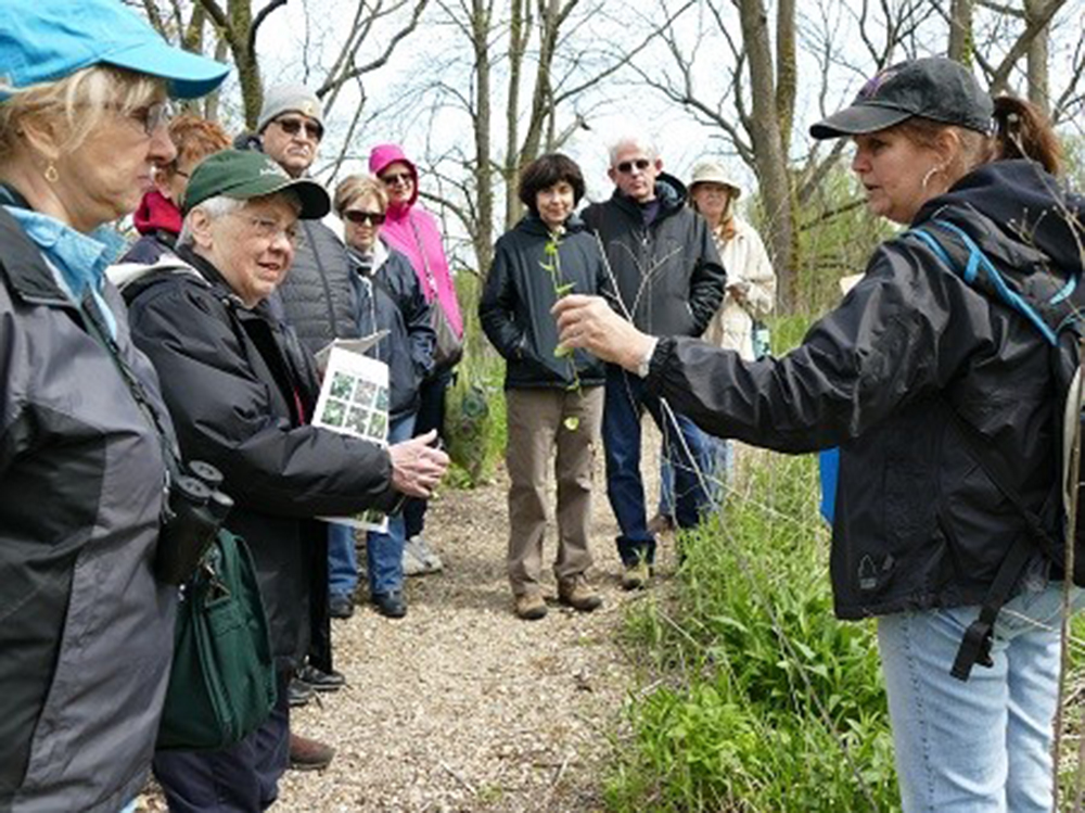 Spring-Wildflower-Walk-Credit-The-Morton-Arboretum