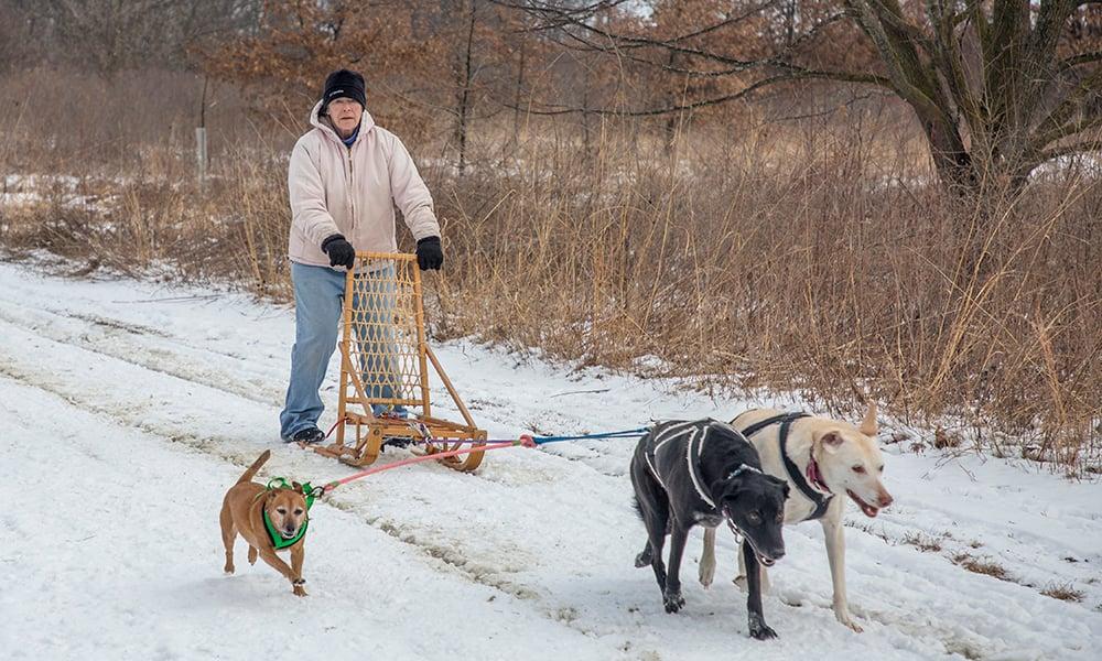 Deb-Maizie-dogsledding