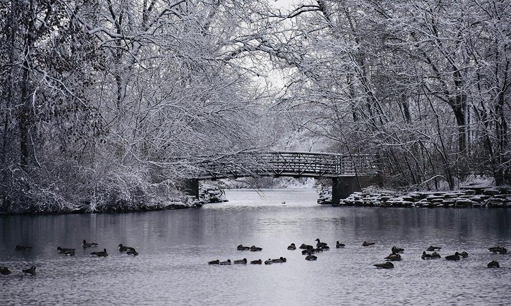 Herrick-Lake-bridge-ducks