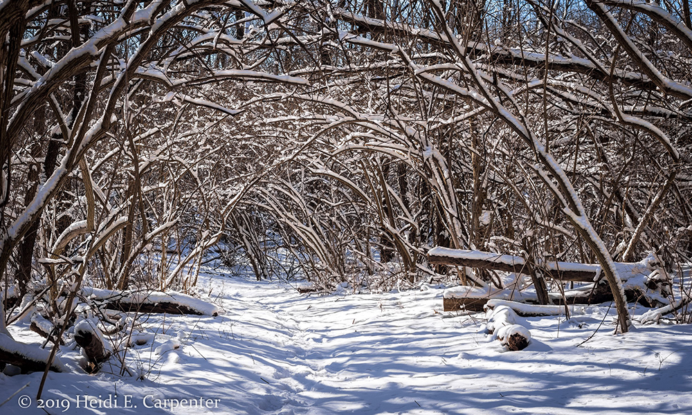 Hidden-Lake-winter-trees-Heidi-Carpenter