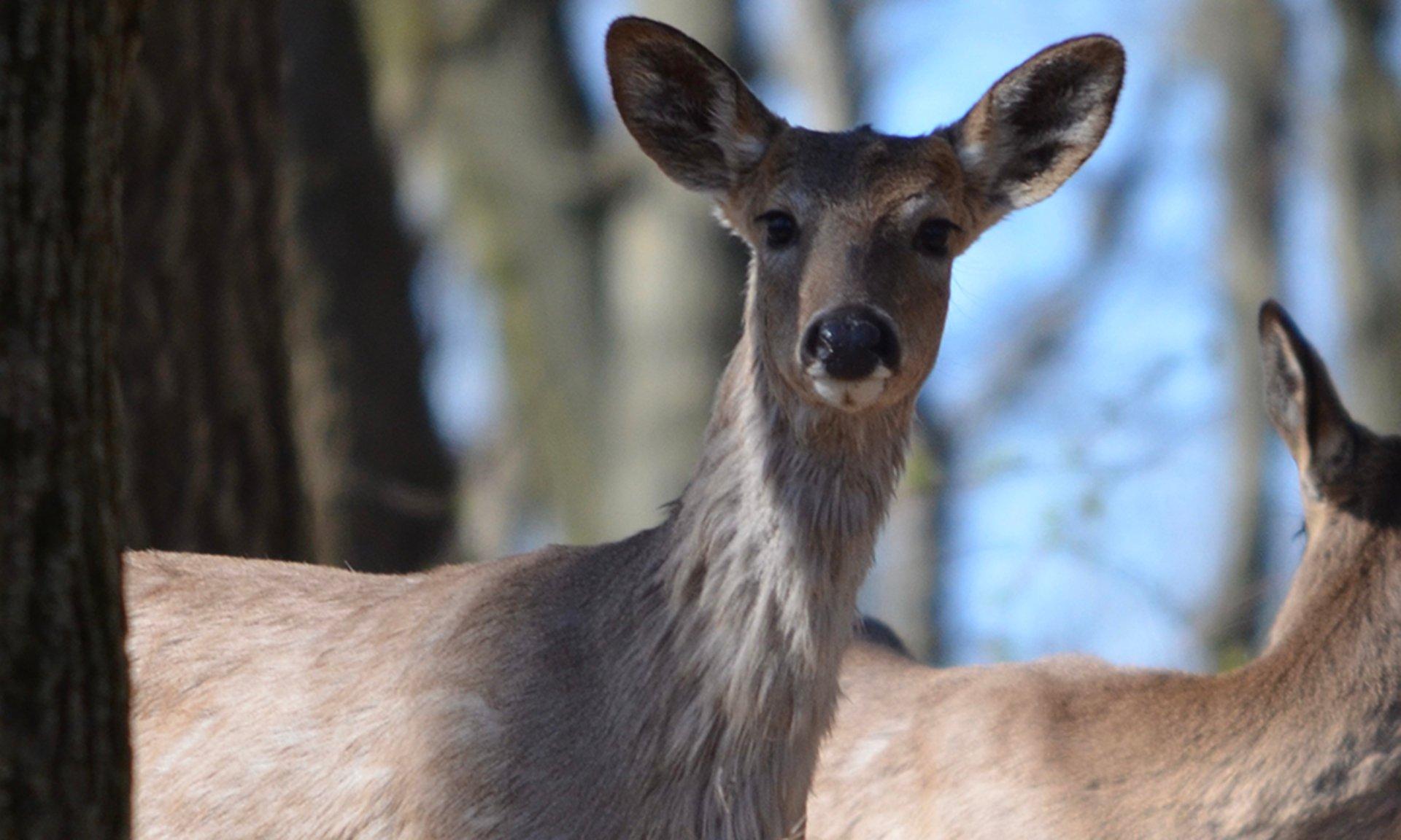 john-cebula-deer-elsenbs-hill