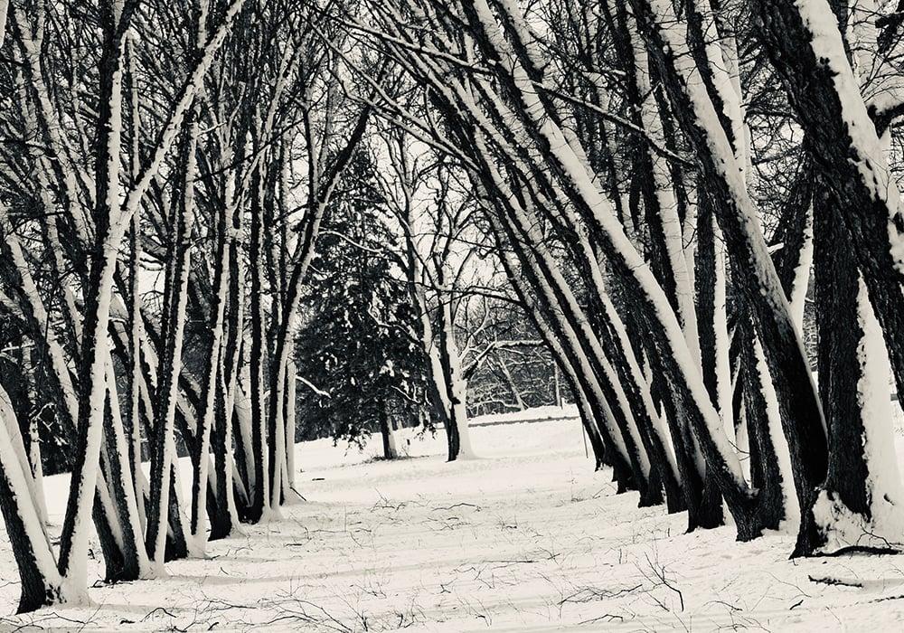 SJF-winter-trees