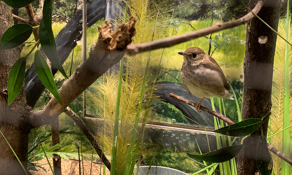 WB-resident-birds -Nina-Hulet