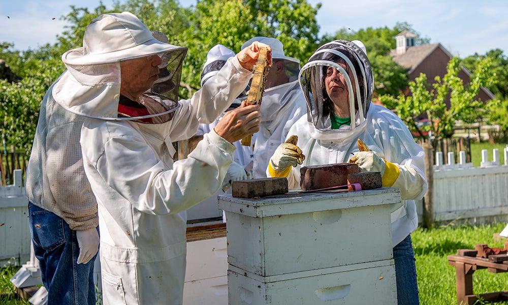 alicia-beekeeping