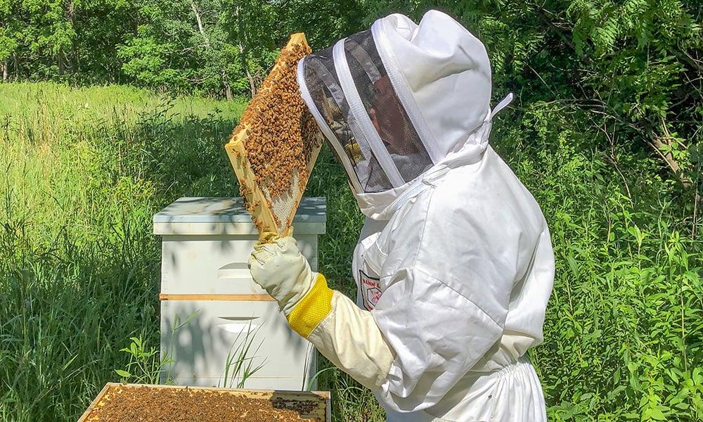 alicia-bees-up-close