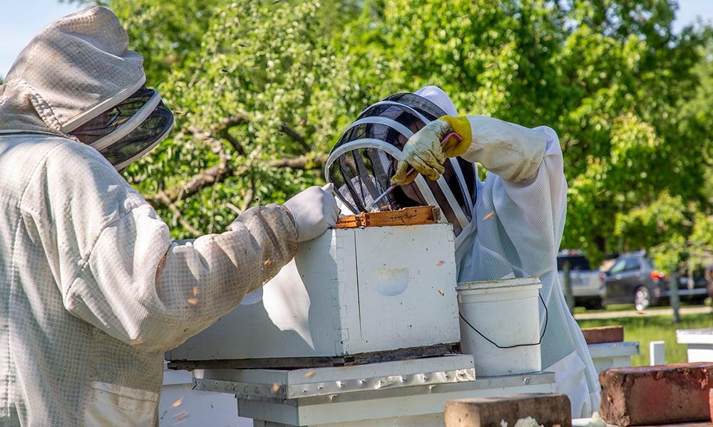 alicia-bees