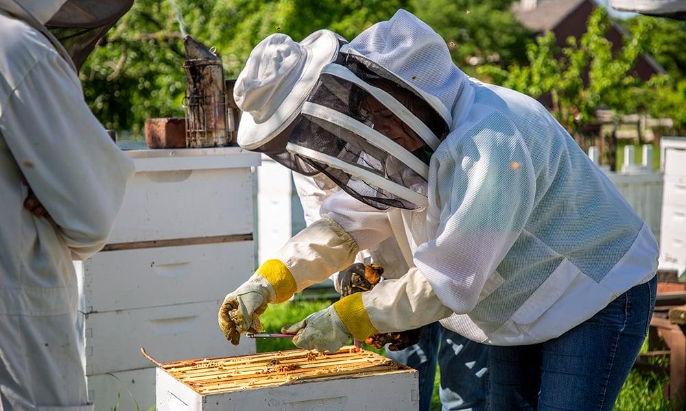 alicia-checking-hives