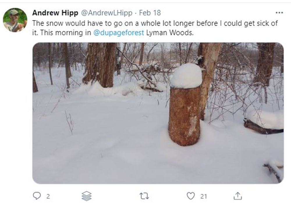 andrew-hipp-tweet-winter