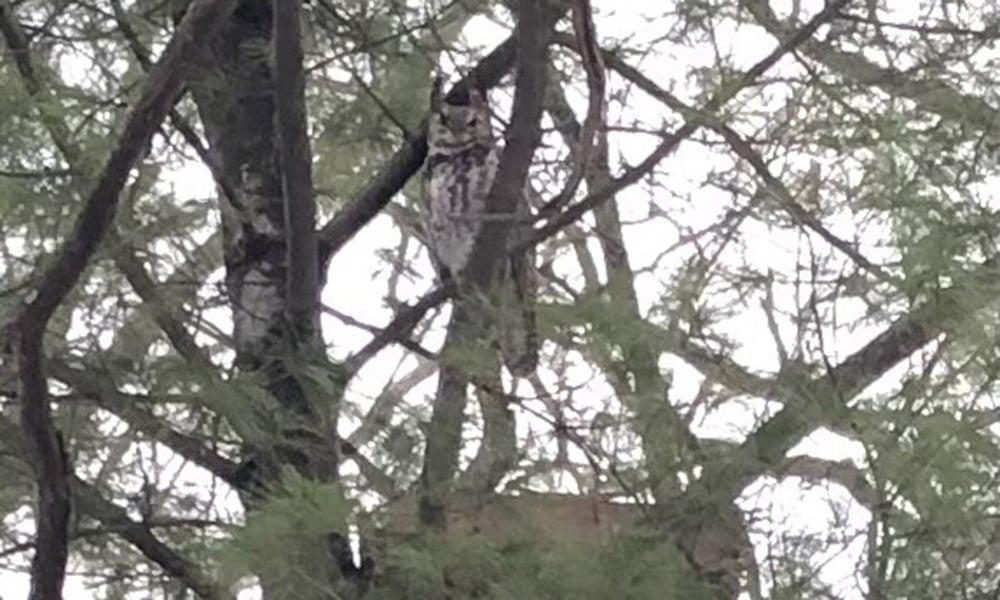 owl-marian-1000x600