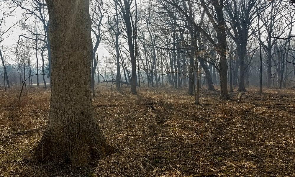 rita-guill-forest