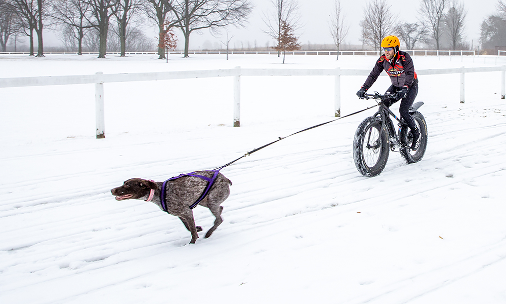 sean-bella-bikejoring