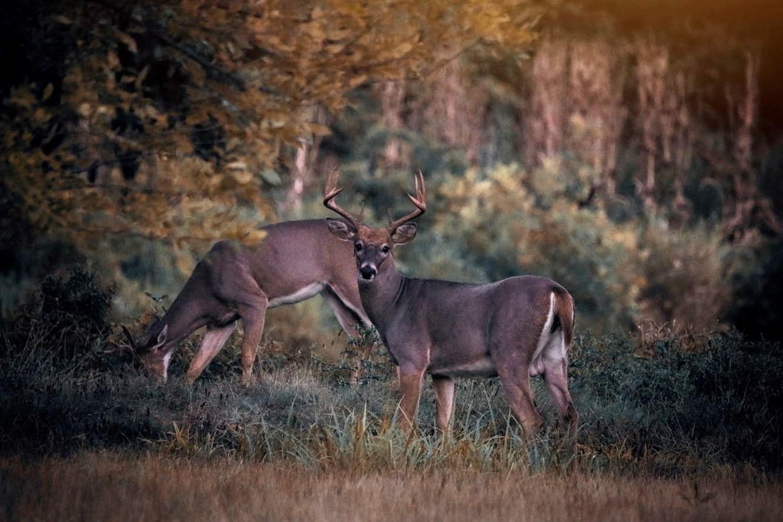 sue nix deer