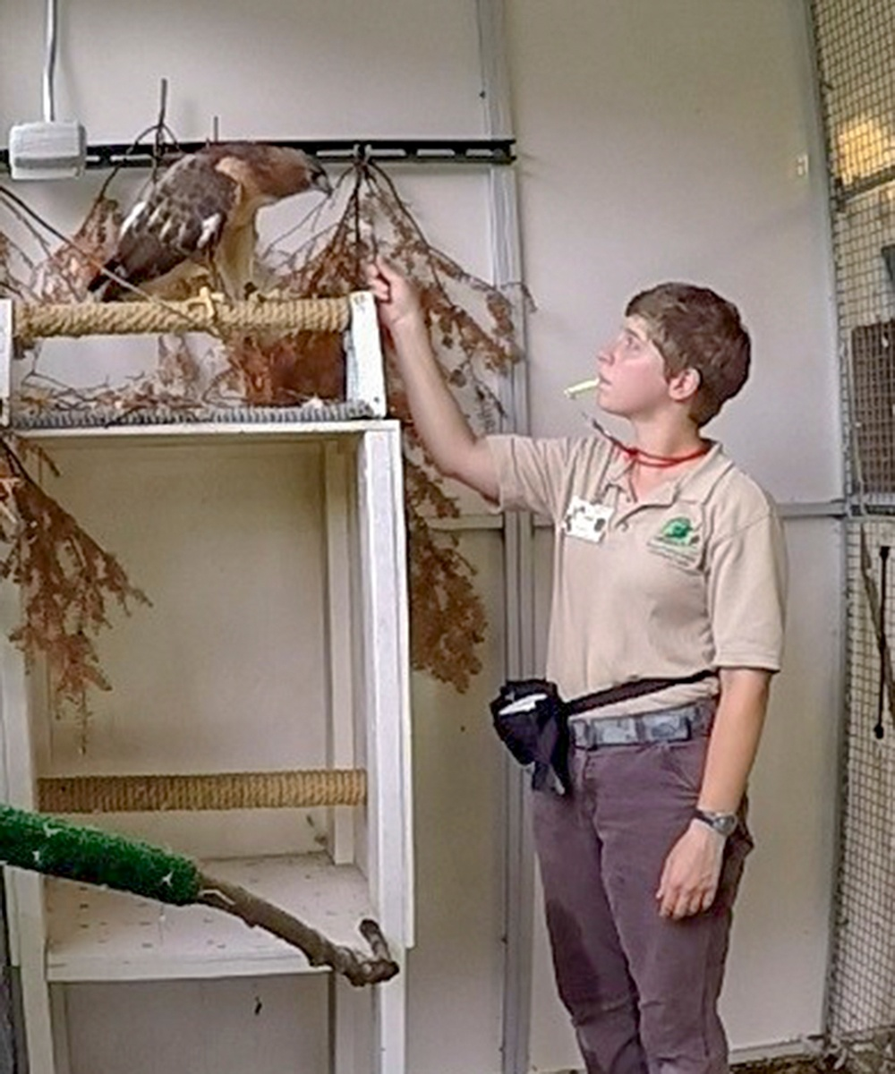 Leigh-Korreck-red-tailed-hawk-Professor