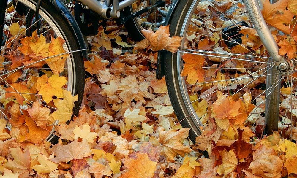 bicycle-wheels-in-leaves-MirabelkaSzuszu-CCBYSA2.0