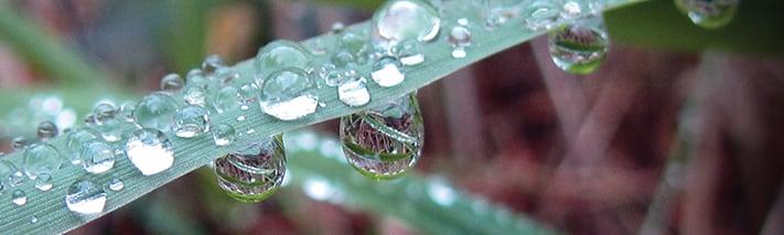 dew drops falling off a blade of sedge