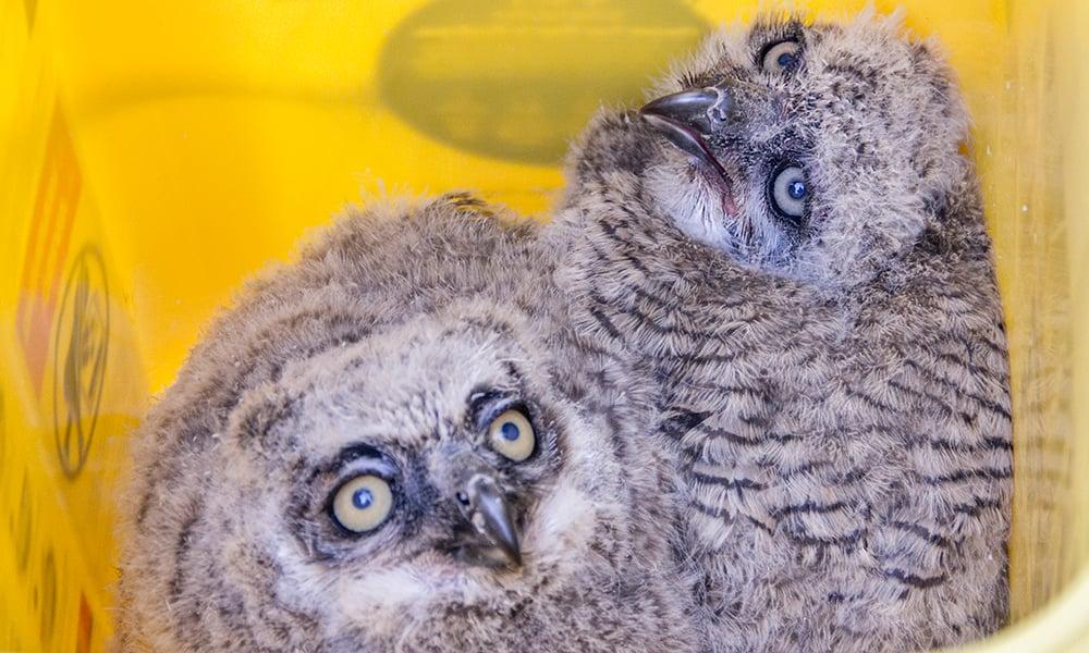 wb-owlets