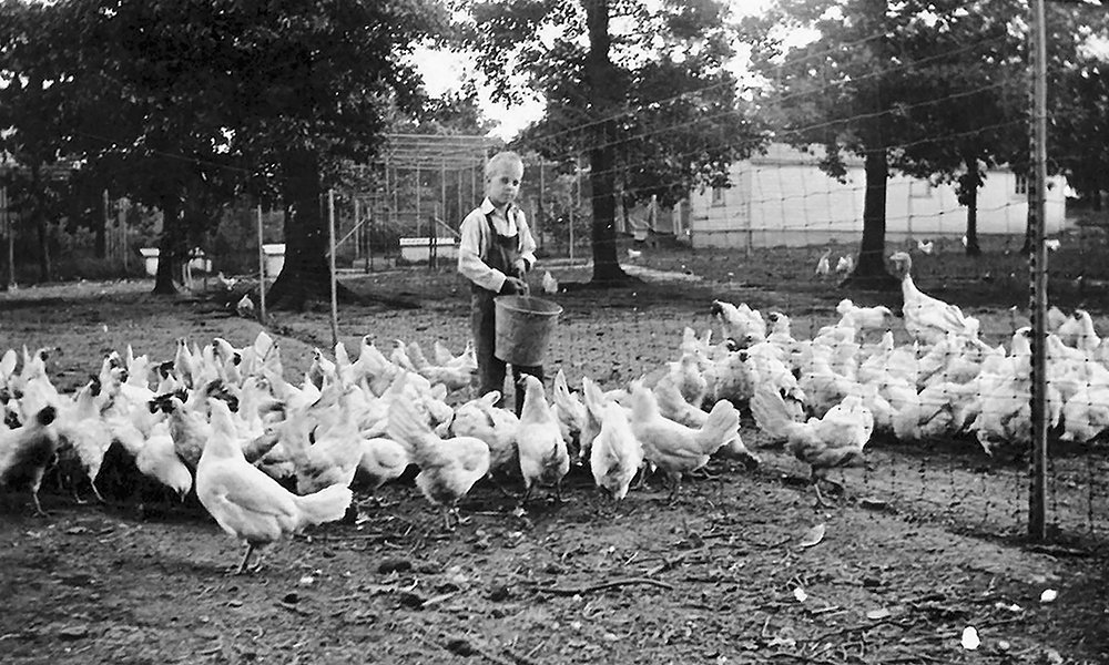 mayslake-peabody-farm-boy-chickens