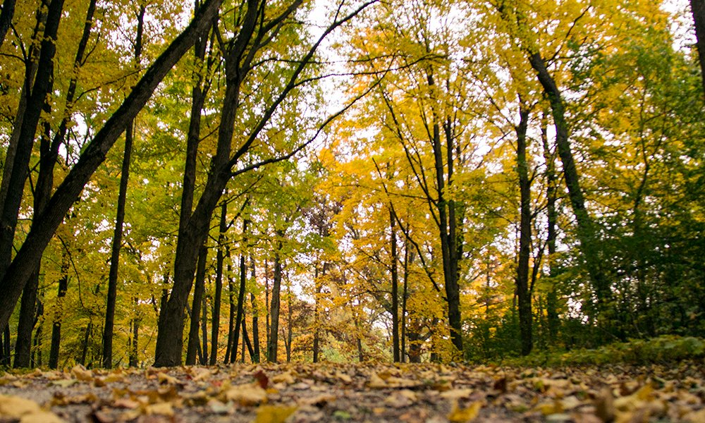 West-DuPage-Wood-leaves-on-trail