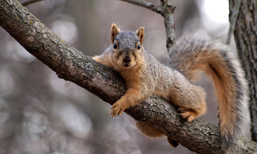 squirrel-tree-limb.jpg