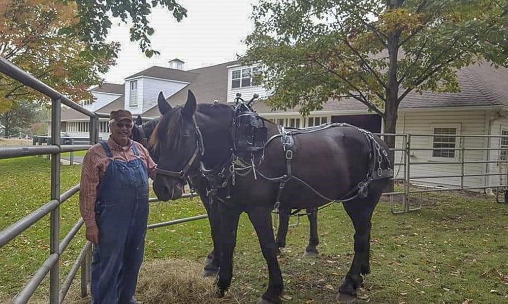Jimmy-horses
